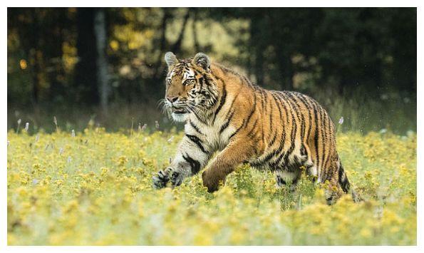 虎虎虎:老天给你准备了天大的惊喜,就在后天!属虎人速看
