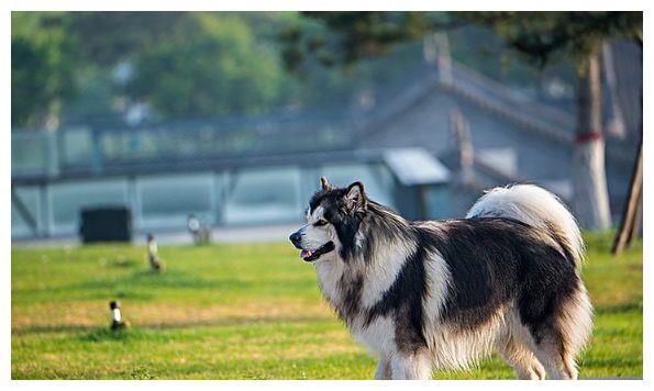 十二生肖狗:就在明天好运不断,福财兼收来,看看你的贵人是谁?