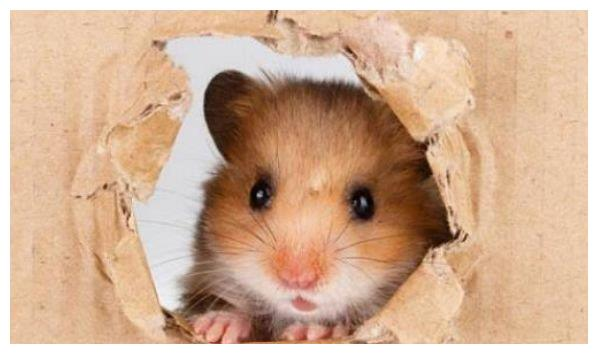 2021年到了,生肖鼠新一年的运势怎么样,属鼠人来看看