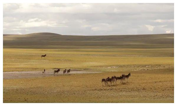 研究人员首获青藏高原中南部新生代地层年代序列