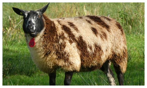 生肖羊12月3号大喜临头,躲不开的喜,属羊人花一分钟看看什么喜