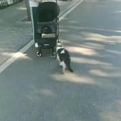 人家猫咪都有专车接,我咋没有呢?把他看得一愣一愣的!