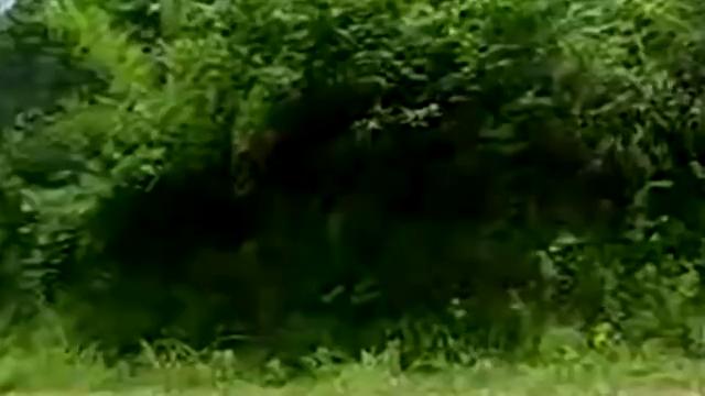武当:郡主不小心摔下马背,小伙跑来帮忙,郡主害怕身边的野人