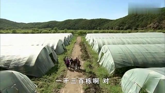 影视:赵四去外村丢人了,看见油田就喊:这是大庆油田吧!