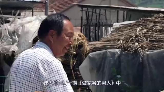 做家务的男人:魏大勋回老家铲牛粪,当牛发出叫声大勋反应太真实