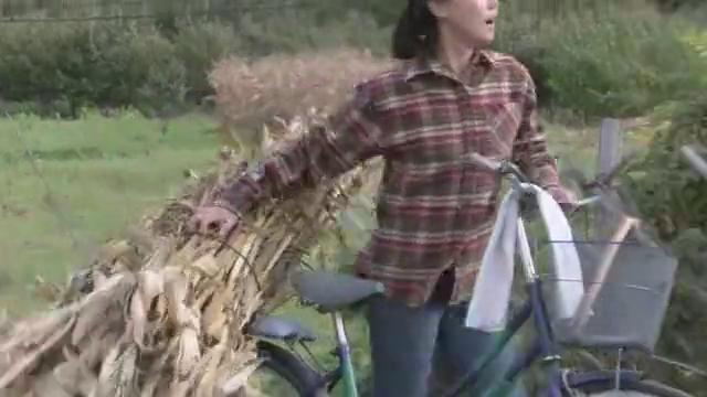 女子收玉米秆遇到难题,不料男子动上来帮助她,心动了!