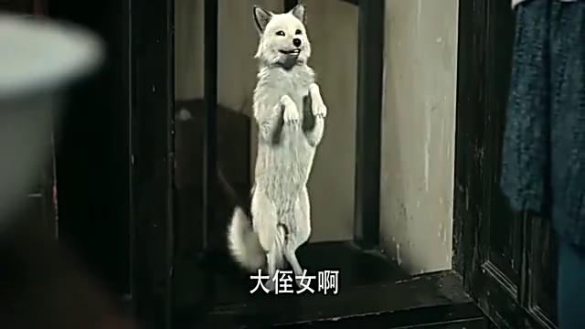 法师家闯进一只白狐狸,不料白狐狸摇身一变,竟成了大美女