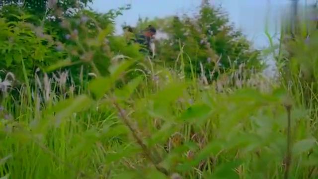 秦岭神树:吃了麒麟竭就是管用,吴邪简直就是一个行走的蚊香!