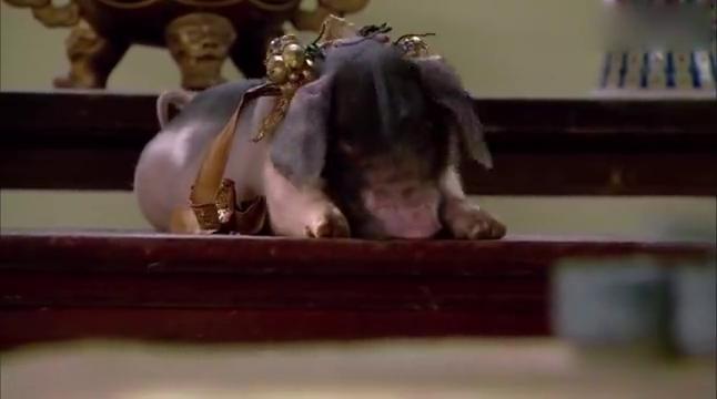 城里发生猪瘟,朝廷下令杀猪,爹娘要处理花猪?