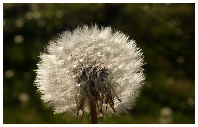 2月下旬,福音临近,耐心等待,牵手爱情,生活将要圆满的四星座