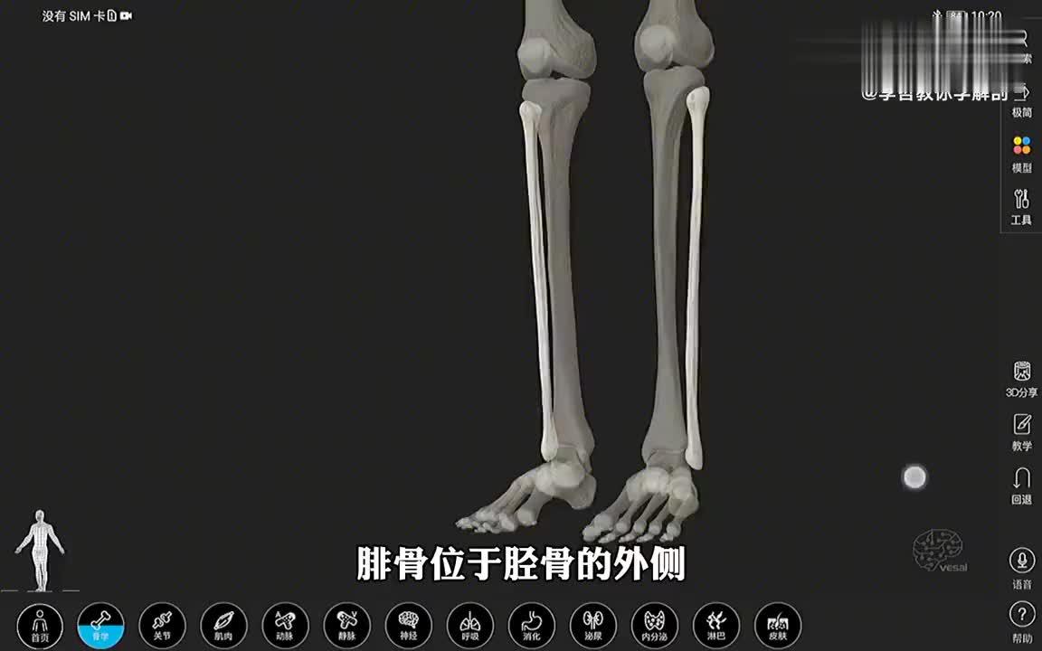 解剖大师 腓骨的3D解剖