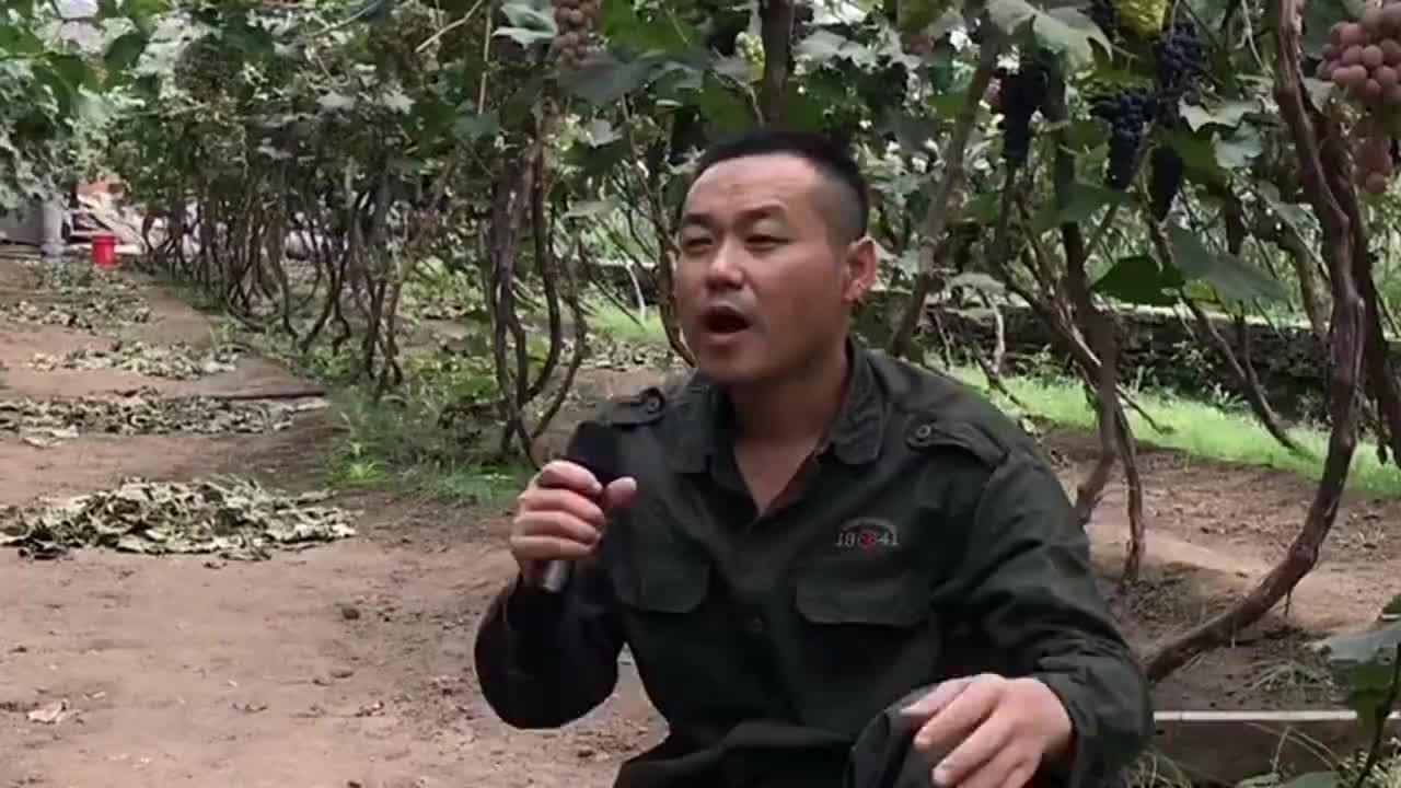 农村小哥在葡萄树下演唱《情火》好声音堪比专业歌手迷人动听