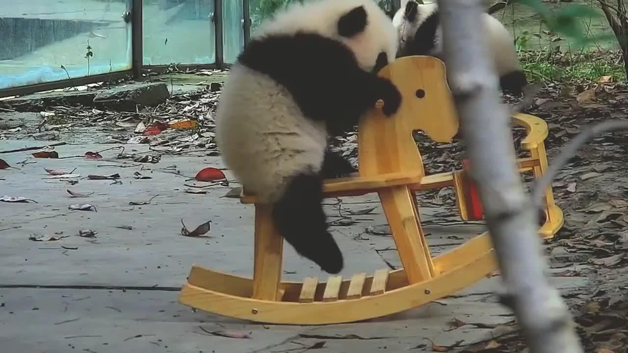 熊猫宝宝看到木马高兴坏了看了接下来的画面别说你不是人扮的