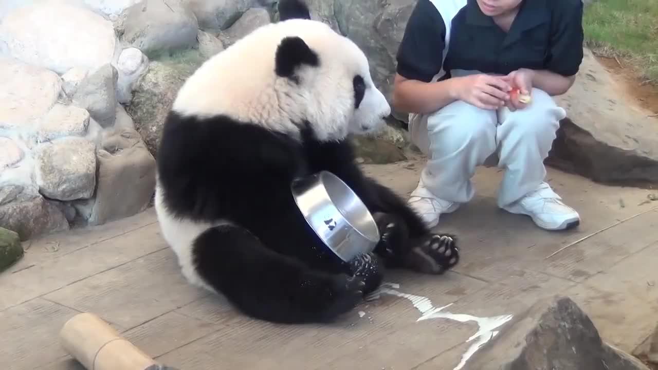 熊猫宝宝你想抢我的盆盆奶是不奶妈我是来送苹果的