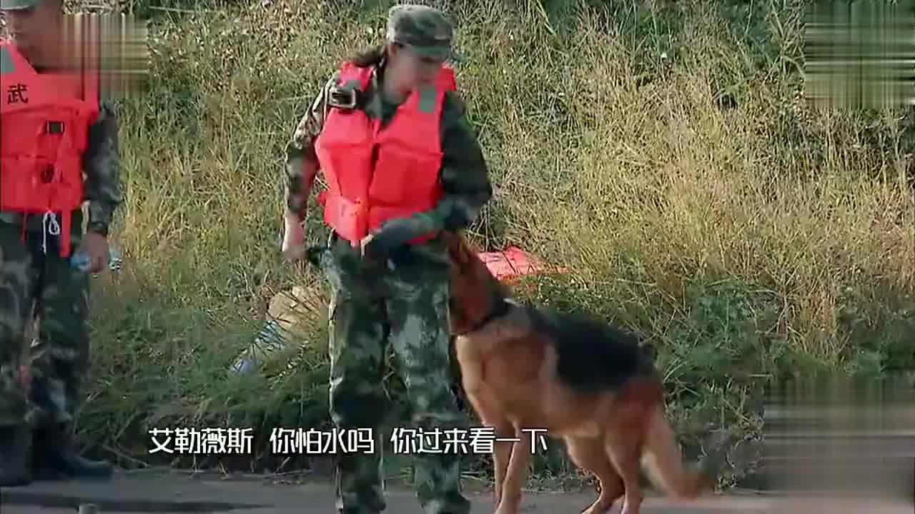 《奇兵神犬》一诺被冠军成功解救,张馨予带爱犬成功克服怕水