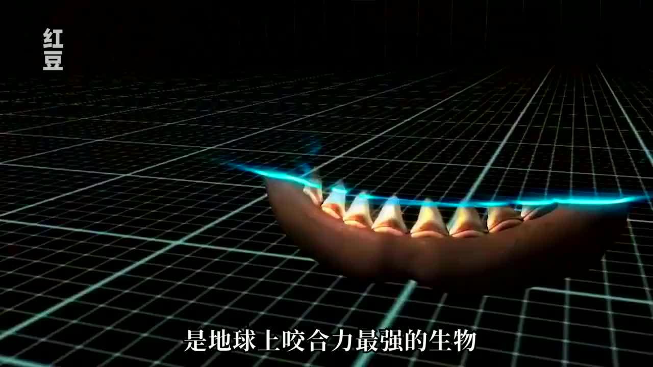 史前巨齿鲨有多可怕,大白鲨就像它的幼崽一样,纪录片《巨齿鲨》