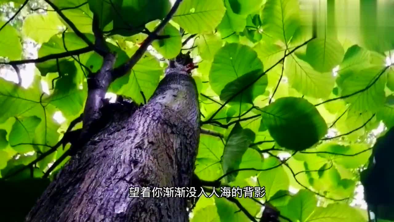 广西郊外发现特大的野生蜗牛,背上怎么会还有蜂蜜巢