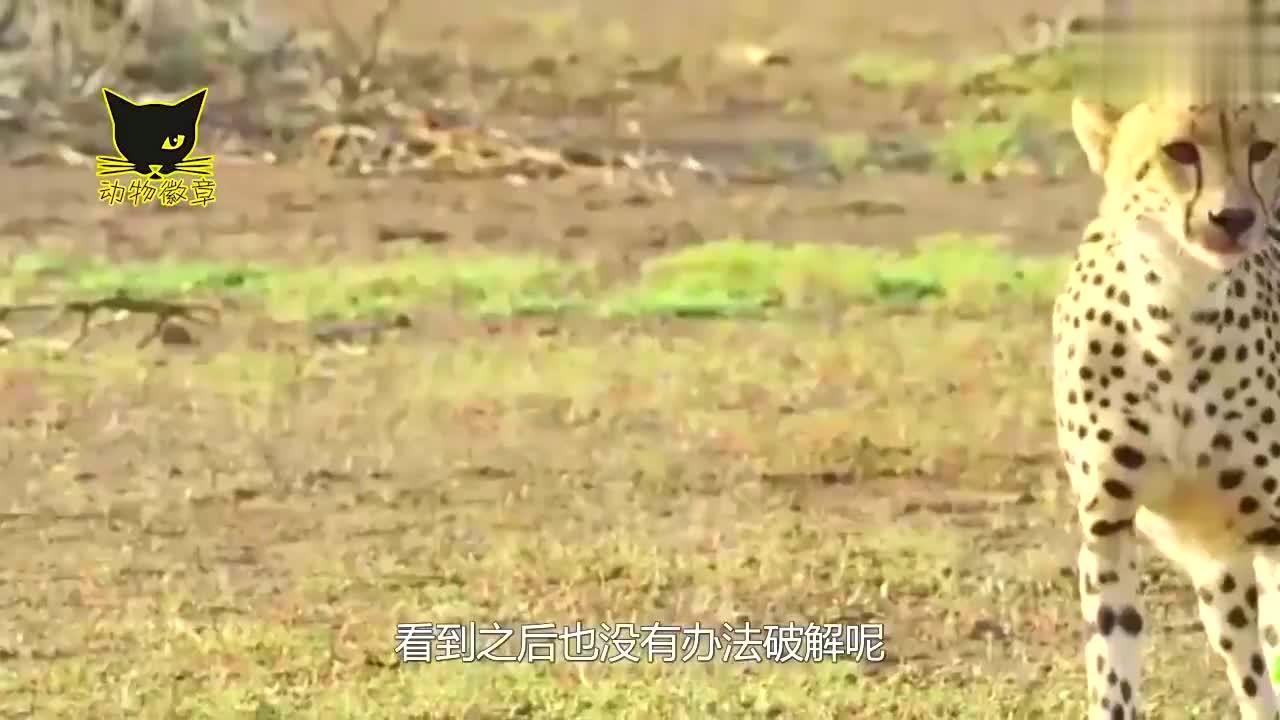 全球防御力最强的五种动物,狮子猎豹都破不开的防御