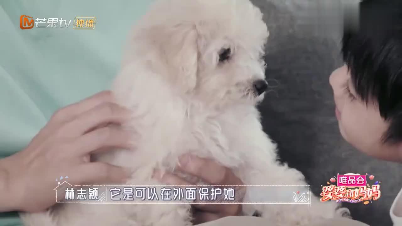 林志颖儿子给小狗起名字,一个比一个奇葩,取个贱名好养活?