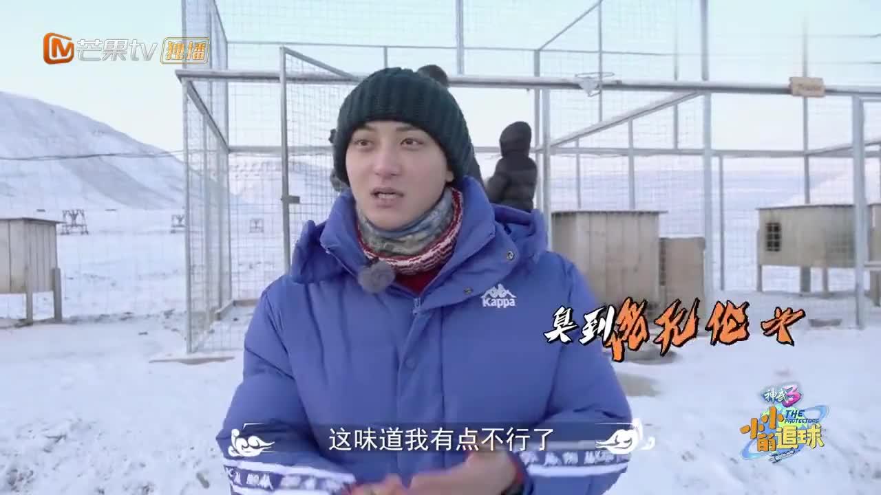 小小的追球:黄子韬嫌雪橇犬臭,用雪洗手,结果被冻成表情包!