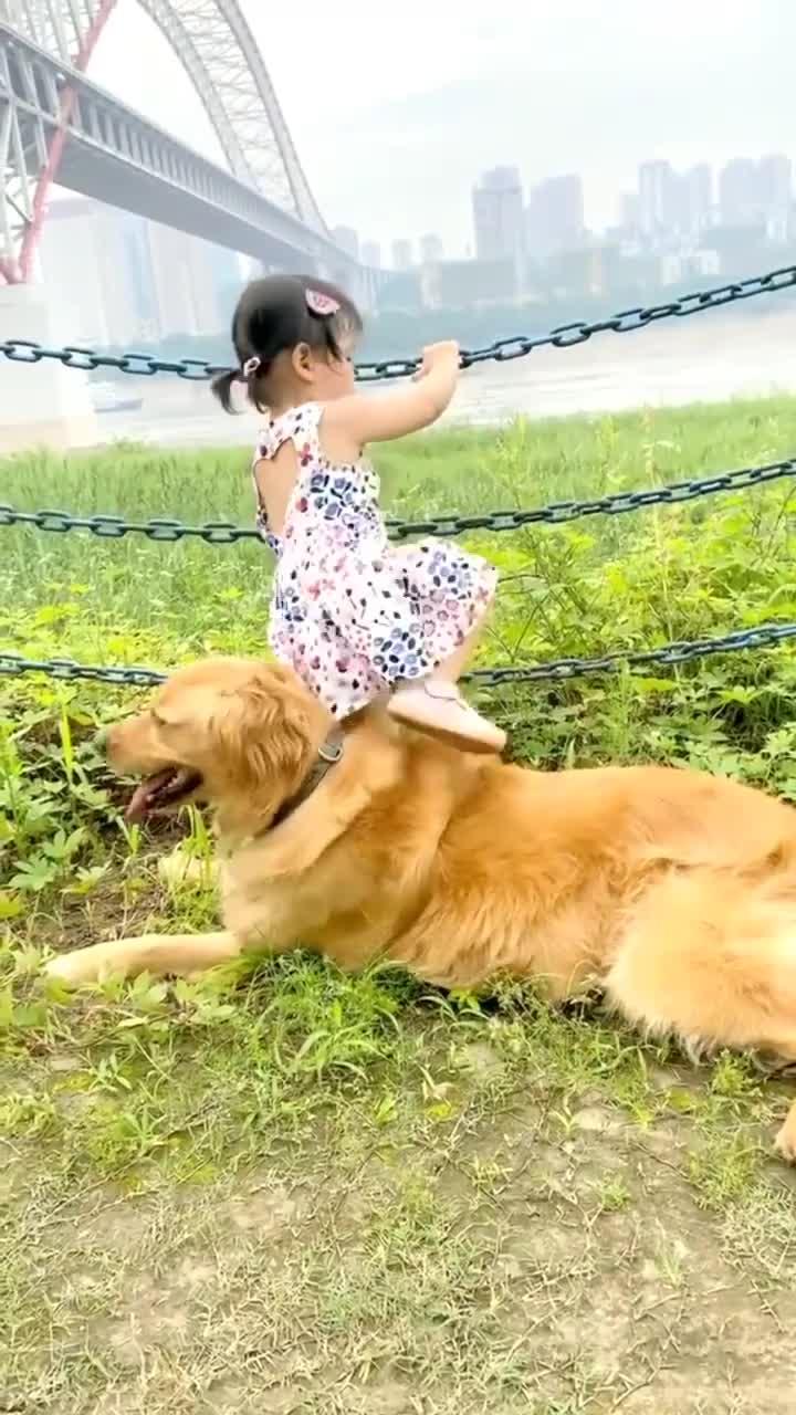 宝宝和狗狗在一起的时候有100种可能发生