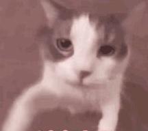 猫咪对着SIRI喵了一声,没想到SIRI是这样回答猫的……