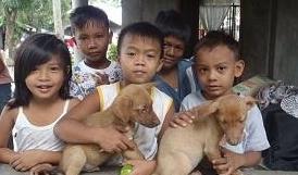 被宠物猫狗抓伤未流血是否也要打狂犬疫苗?