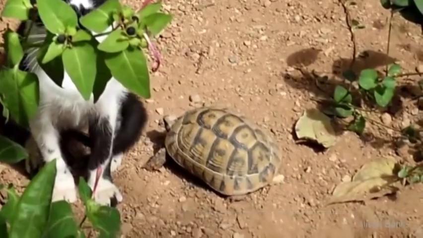 乌龟没有外壳能不能活,答案一般人不清楚,原来如此