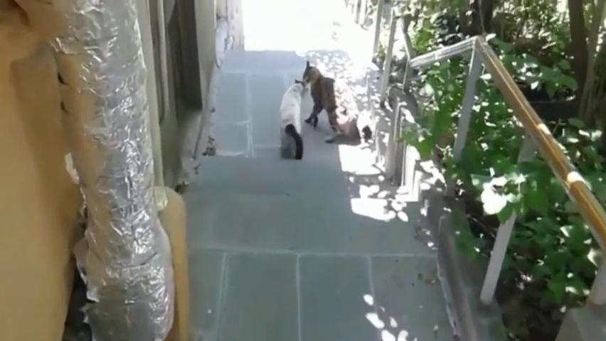 野外遇见几只流浪猫打架,走近一看发现不对,细看高兴坏了