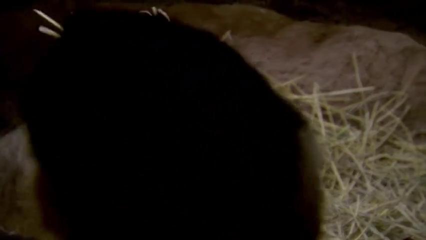 生命之轮:犬鼠出洞查探四周情况,却发现穴鸮霸占洞穴养育雏鸟