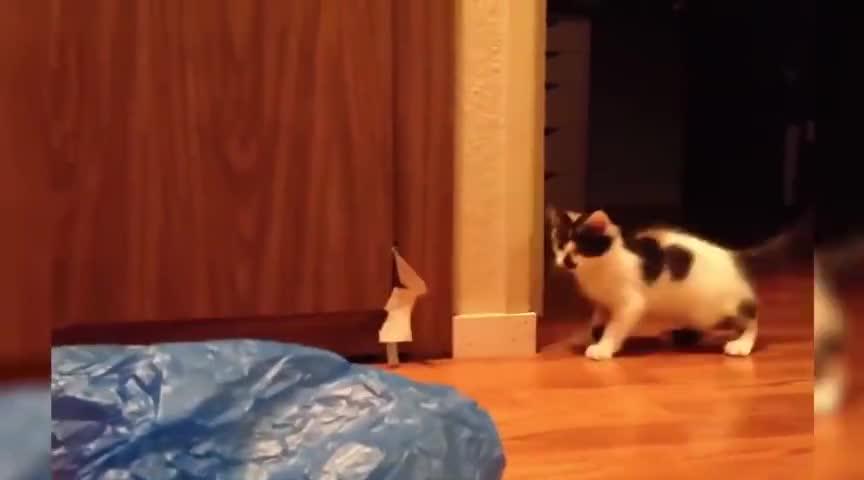 猫咪:这个东西真神奇,会自己跳哎。卧槽!刚刚发生了什么?