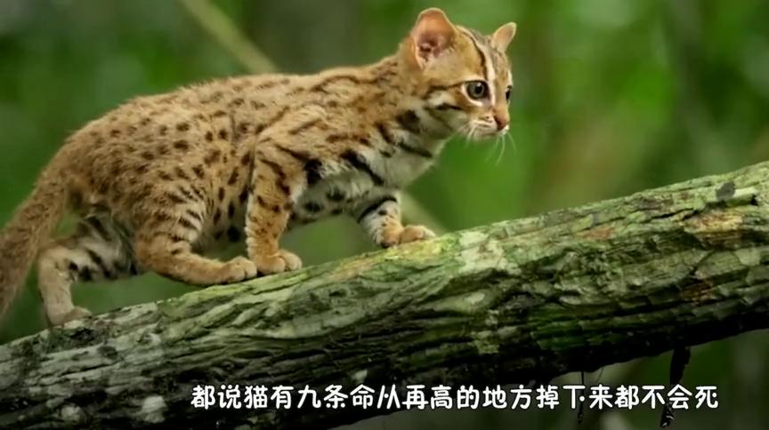 国外博士将150只猫从30层高楼扔下