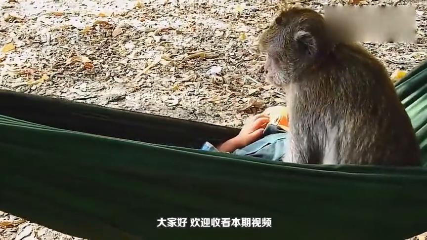 主人为猴子剃胡子,剃完之后帅多了!网友:和小孩一模一样!
