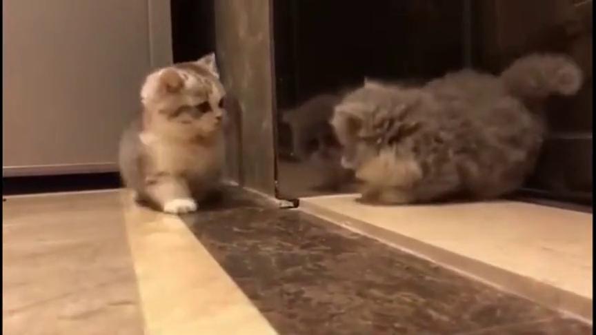 两个小猫咪,腿短就不要打架了,都打不着对方