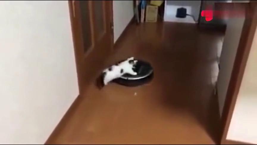 猫咪正在玩,却莫名其妙被扫地机器人顺走了,猫-是我叫的车吗!