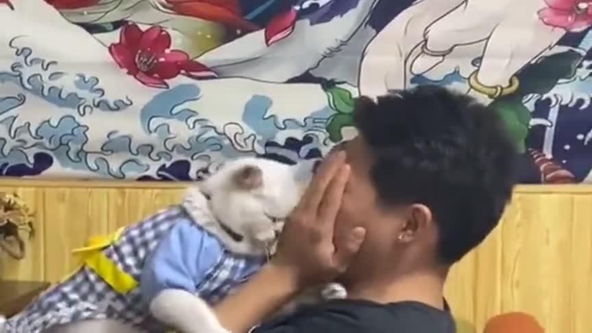我家猫咪没治了,一看到帅哥就控制不住自己,真是没谁了!