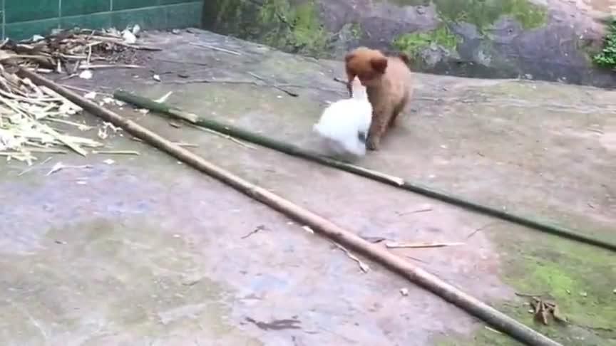 狗子追兔子玩,最后差点被反杀