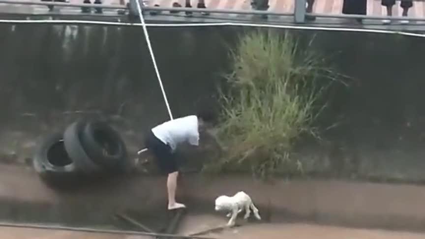狗狗也知道好人在救自己,乖乖在那里待着一动不动,看起来好懂事