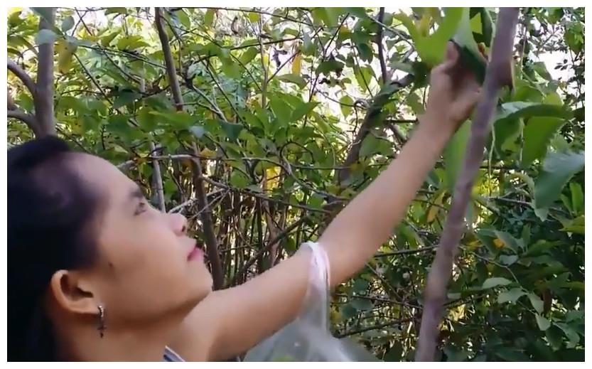 泰国的奇特美食,进入泰国香蕉园只是为了这白嫩嫩的虫子