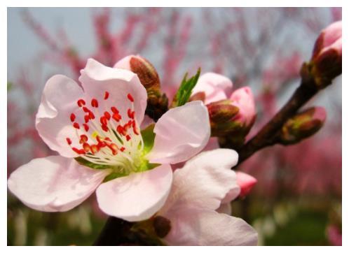 四月桃花运爆棚,易获新欢的4大生肖,魅力大于天,注定要脱单