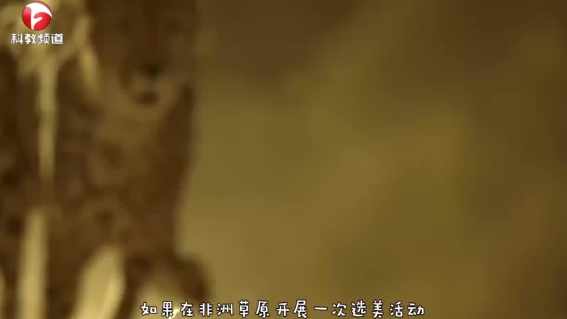 猎豹将瞪羚按在地上,被瞪羚重伤,真是出人意料!