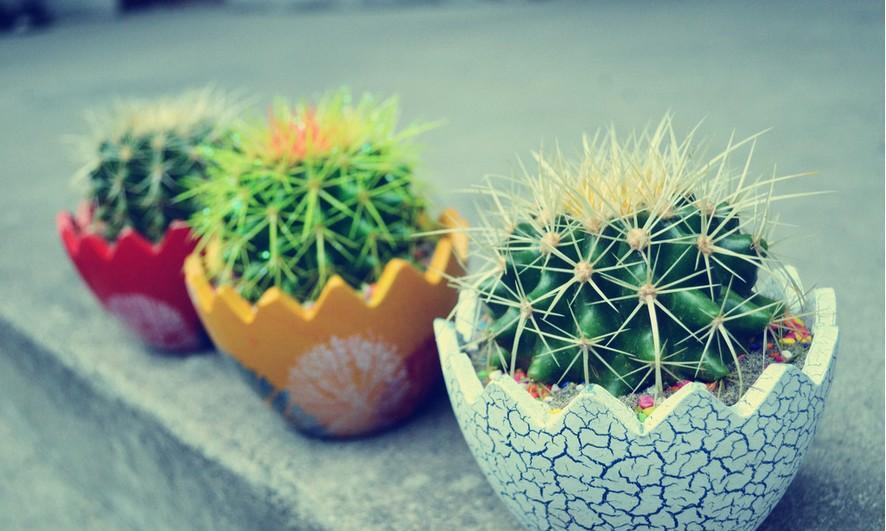 用长毛的黄豆来养花,效果要比花肥要好100倍!