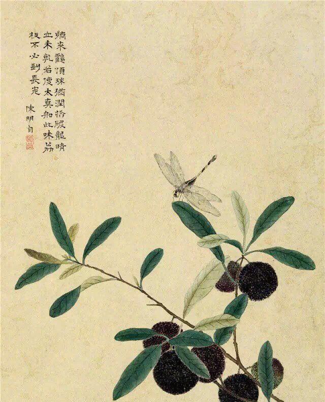 能诗,工篆隶及正书,擅画花卉。明清时代画家陈明自绘画作品欣赏