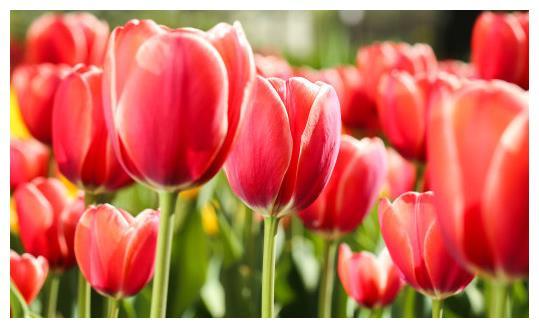 4月中旬,4属相财运亨通,财富大涨,财源滚滚,名利双收