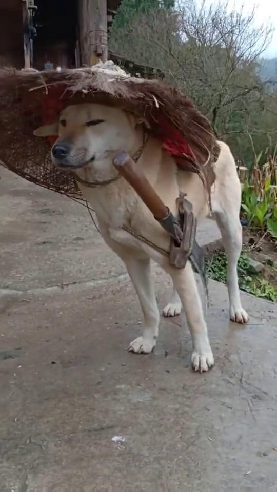 寒江孤影,狗子你是哪门哪派,这一副造型简直太雷人!