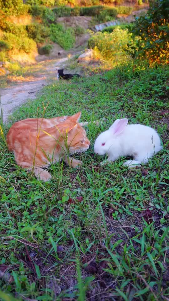 茶园来了新成员~小白兔