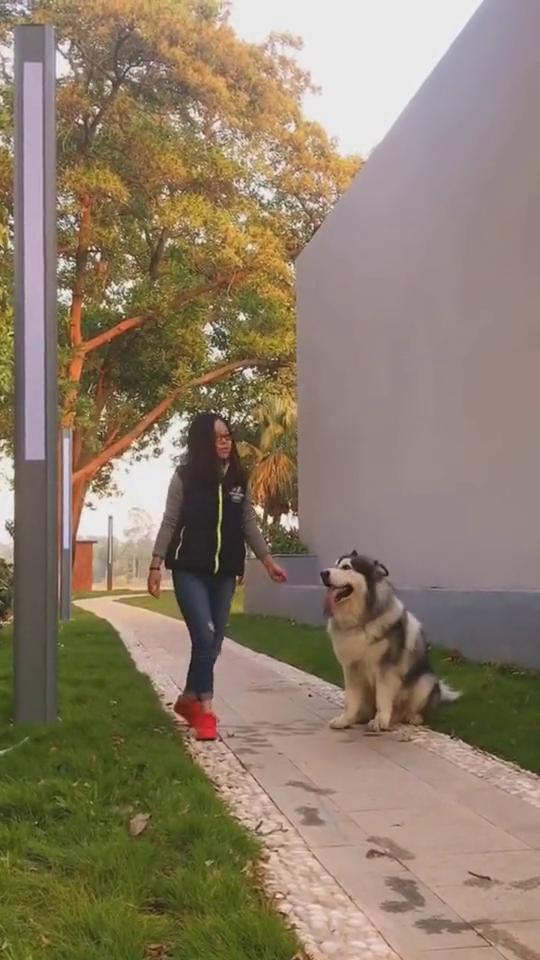 能绑住狗的,可能就是一种信念,隐形的绳子还能这么玩