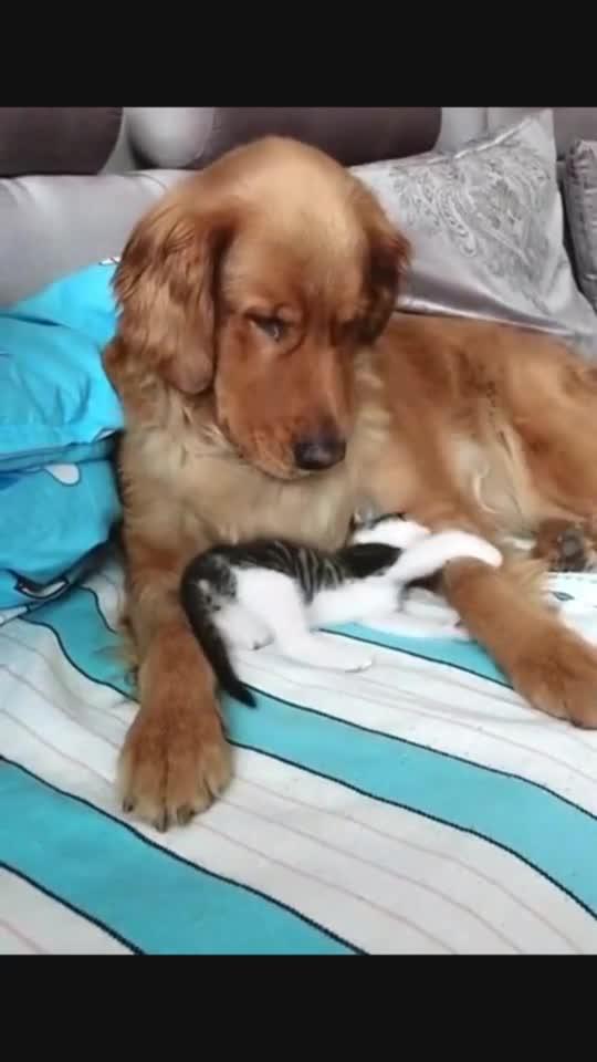 小奶猫实力诠释了长得好看就可以嚣张,真的太呆萌了!