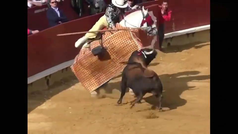 斗牛士长矛刺公牛,公牛愤怒报复,这下可有的看了!