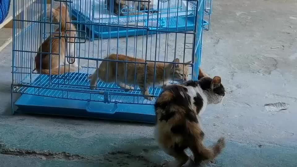 失独猫妈妈24小时寸步不离守护陌生小猫网友:万物有灵!